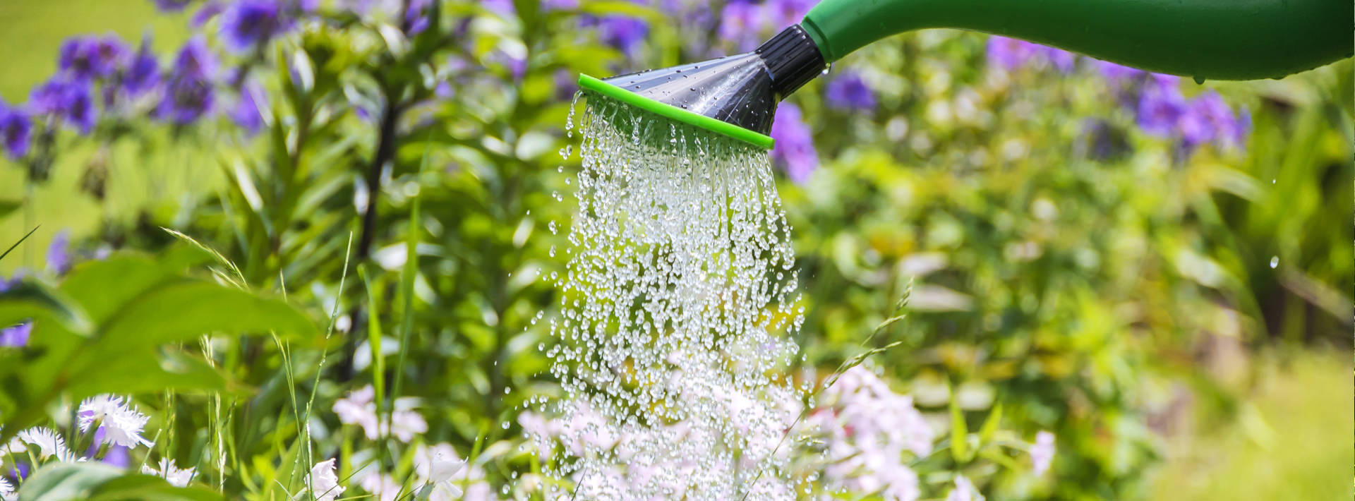 Image en-tête - Économie de l'eau