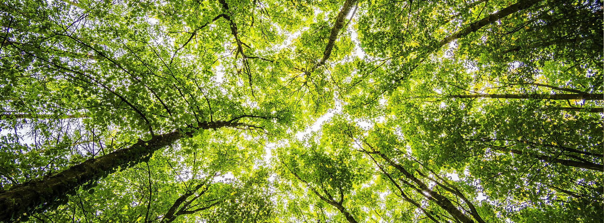 Image en-tête - Plantation d'arbre