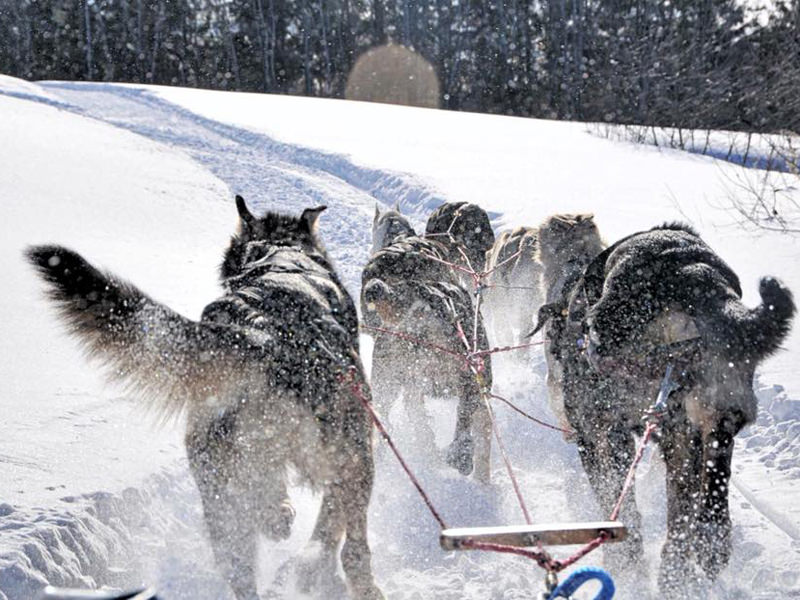Ranch-Canon - Manitou Mushers