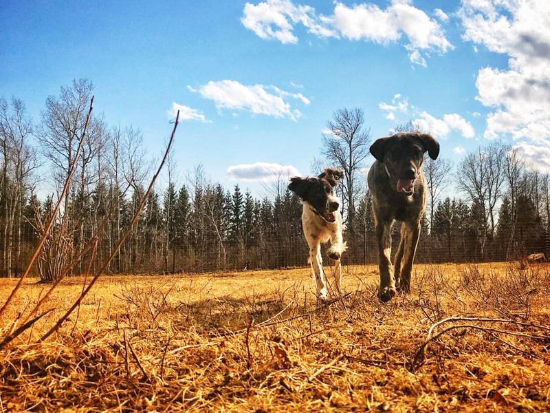 Manitou Mushers / Ranch Canin Manitou