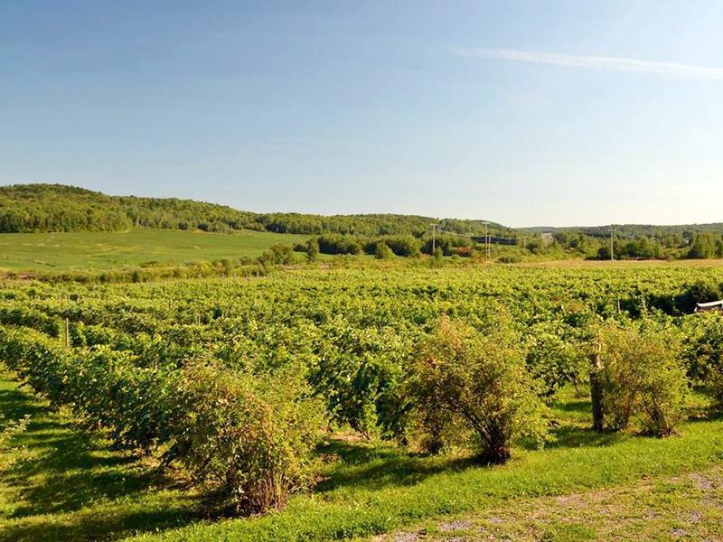 Vignoble Clos Sainte-Thècle